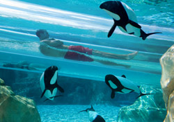 Dolphinplunge