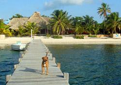 Belize-AmbergrisCaye-Dog-DEF