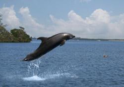 Fl-sanibel-dolphin-def