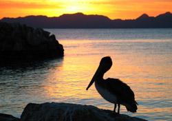 Loreto-bird-def