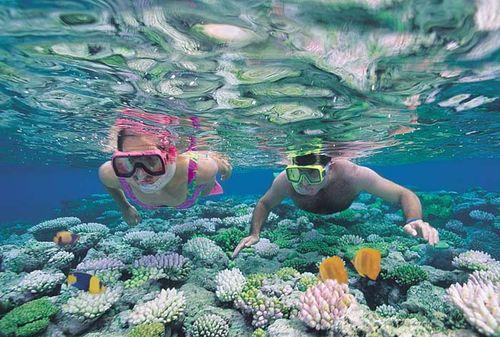 Cairns snorkellers
