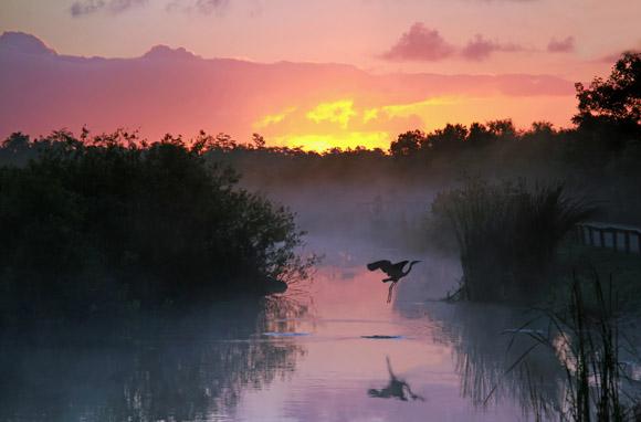 Everglades-580x382