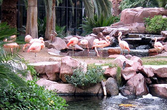 580x382_Flamingo