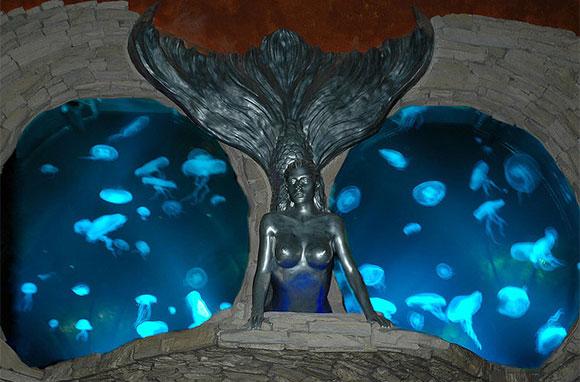 580x382_Silverton-Aquarium
