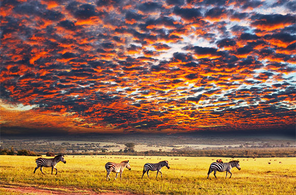 580x382_COVER_Africa_Serengeti-National-Park_Zebras-at-Sunset