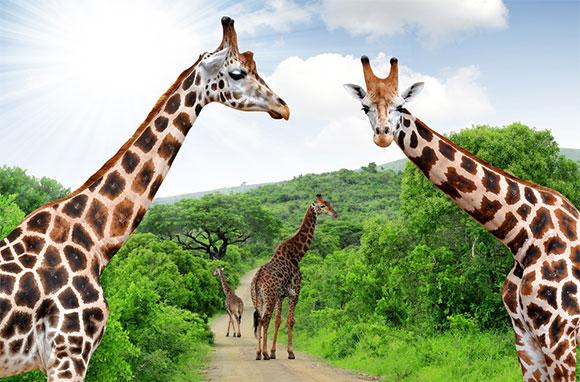 580x382_Kruger-National-Park_S-Africa