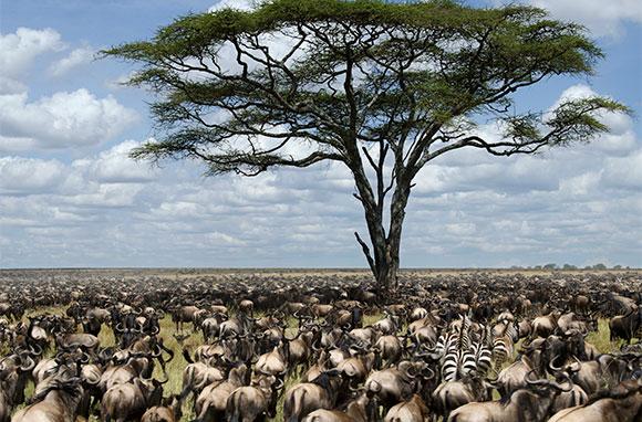 580x382_Serengeti-National-Park_Tanzania